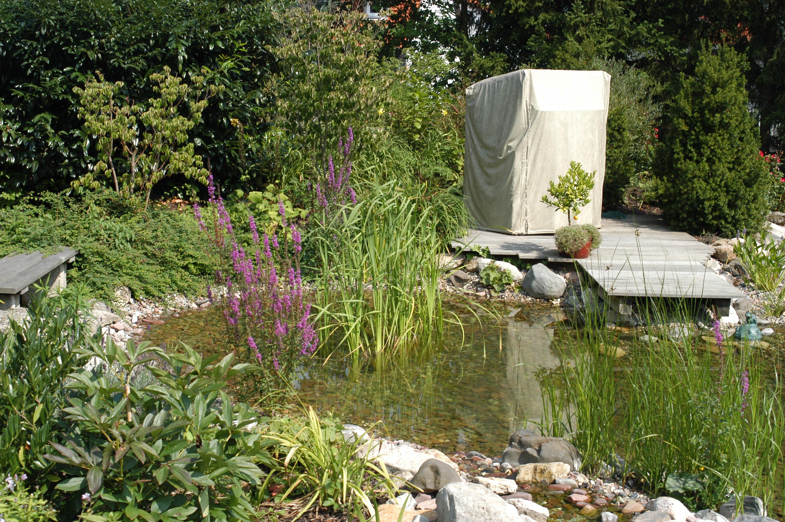 15 Teich mit Sumpfzone