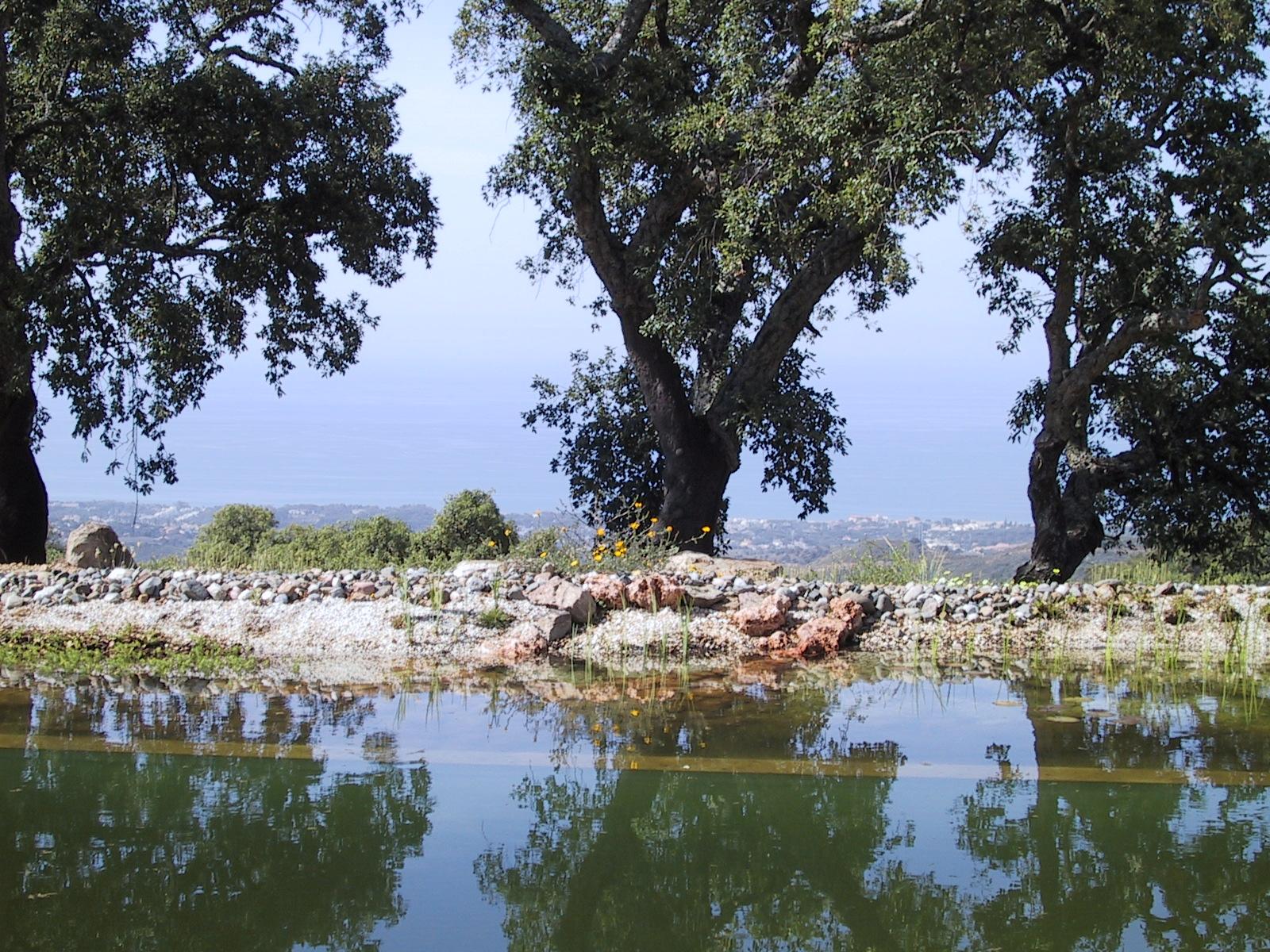 40 Befüllter Teich