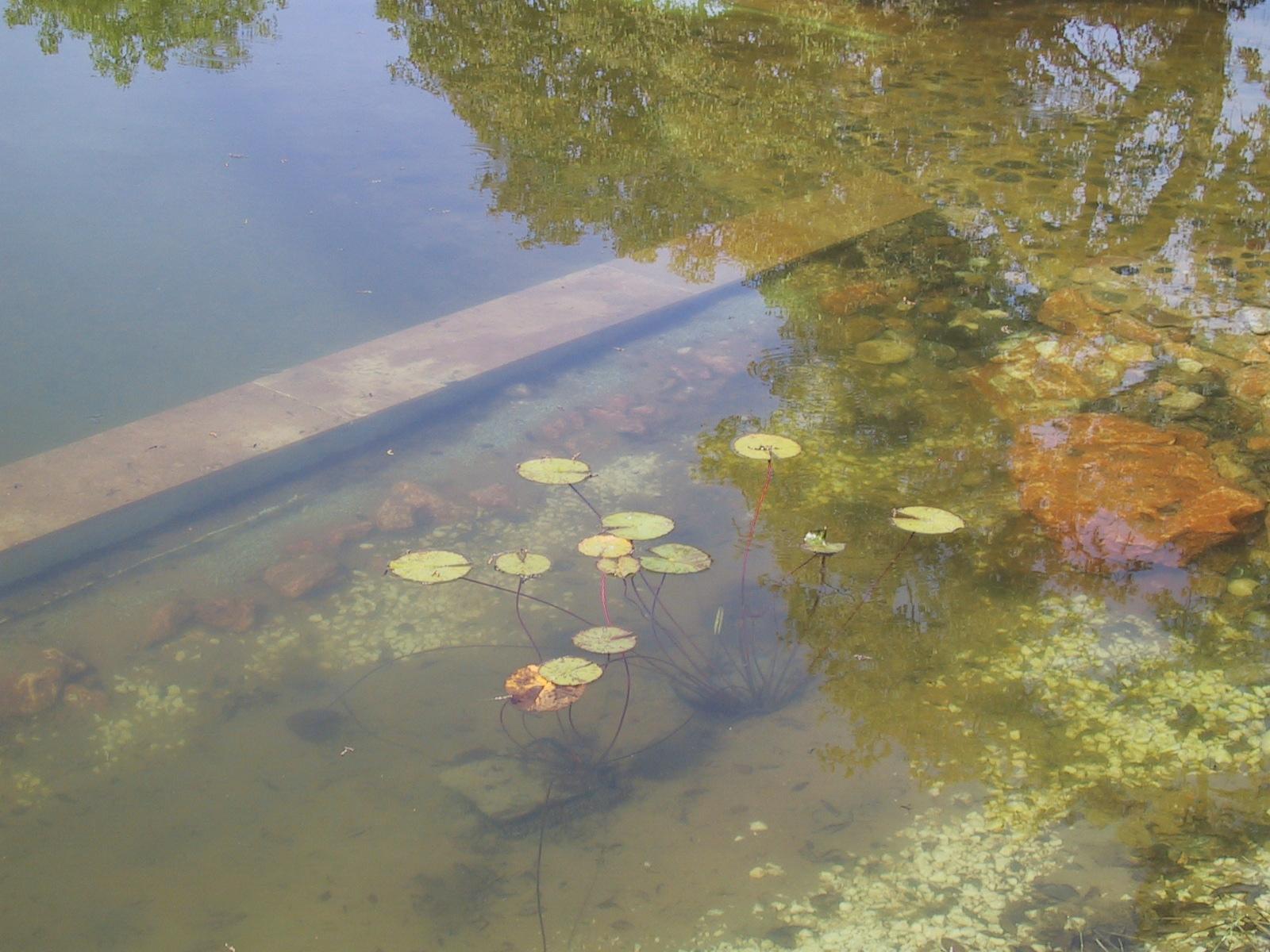 34 Befüllter Teich mit Seerosen