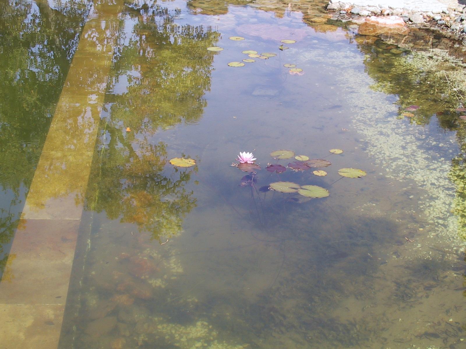 35 Befüllter Teich mit Seerosen
