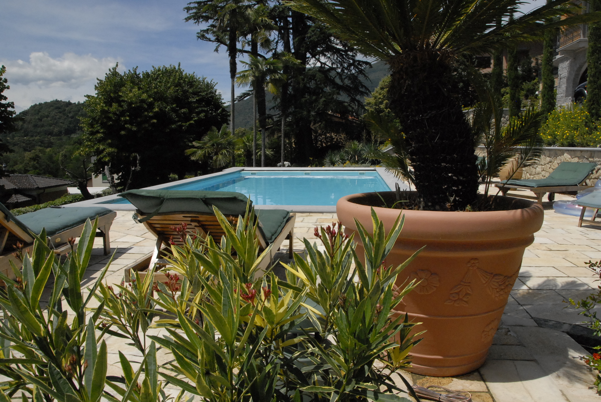 Pool Curio